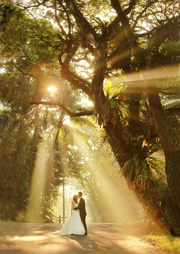 Lovely and Sweet Wedding Pictures with Sunlight Through